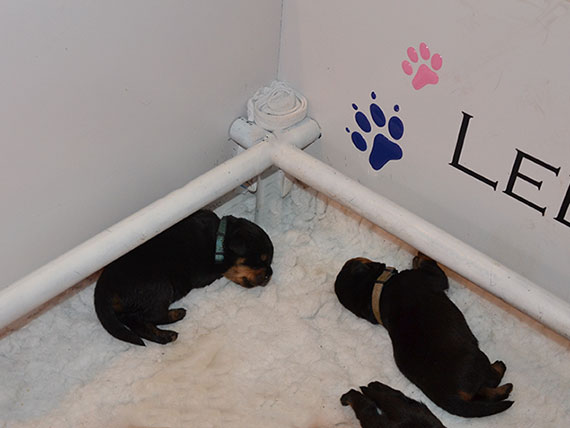 puppy's J-nest week 1