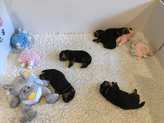 puppy's K-nest week 3